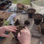 How Long Do Peat Pots Last? The Clue!