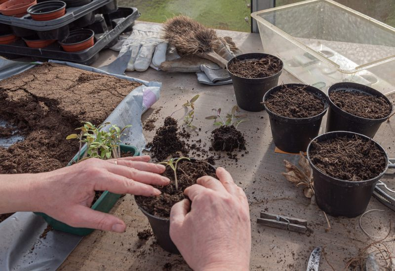 How Long Do Peat Pots Last
