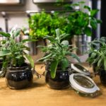 How to Apply Diatomaceous Earth UK on Houseplants? 2 Proven Methods!