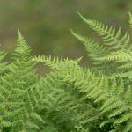 How To Split Ferns? 3 Bonus Steps!