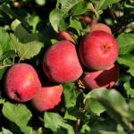 How To Start An Apple Orchard Business? The Solution!