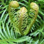 How To Overwinter Ferns? 3 New Steps!