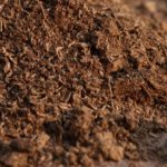How to Spread Peat Moss Effectively? 3 Special Steps!