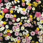How To Care For Carpet Roses? 3 Secret Factors!