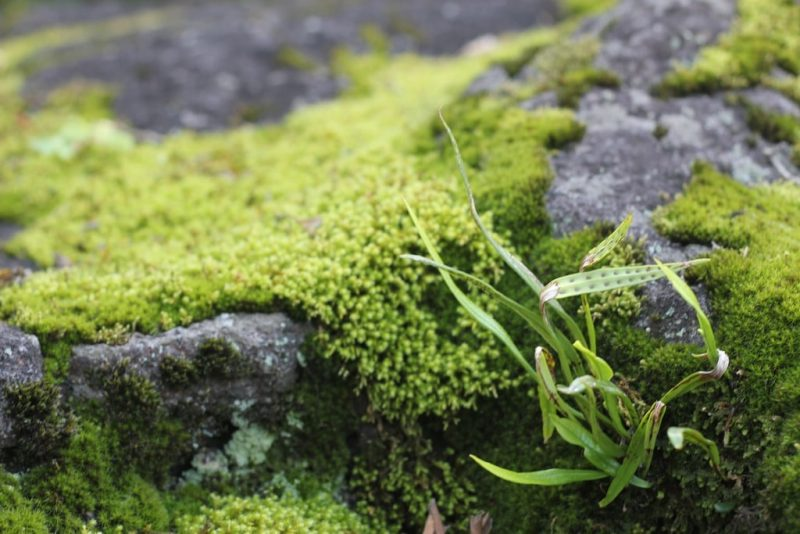 How to Control Green Algae in Your Soil|