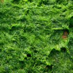 How to Get Rid of Green Algae On Your Seeding Soil? 3 Special Tips!
