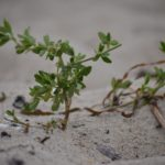 How To Sterilize Sand For Plants? 3 Proven Steps!