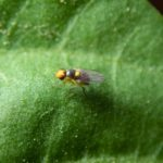 How To Get Rid Of Leaf Miners? 7 Easy Tips!