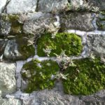 What Is The Difference Between Moss And Liverwort? Discover New!