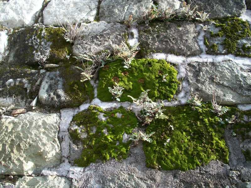How is A Liverwort Different From A Moss 