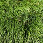 How To Stop Ornamental Grass In The UK From Spreading? 3 Effective Methods!