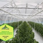 Example Of Polytunnel Farming Covid-19 Explained For Beginners!
