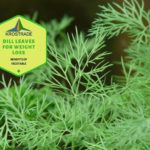 Example Of Dill Leaves for Weight Loss! 10 Free Tips!