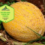 Do Melons Grow On Trees? 4 Easy Steps Explainer!