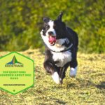 Example Of Dog Run Definition! 7 New Tips!