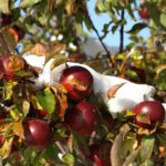 Examples Of Fruit Trees That Grow In The UK!