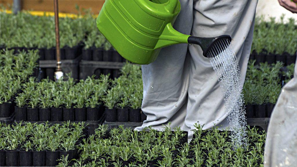 Gardening In Southeast Idaho