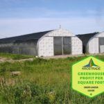 Example Of Polytunnel Profit Per Square Foot! 5 Free Plants!