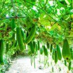 Growing Zucchini In the UK? 4 Secret Tips!