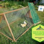 How Do You Make A Simple Open Front Chicken Coop