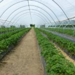 How Does Polytunnel Help In Growing Plants? 7 Exclusive Plants!