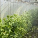 How Hot Can a Polytunnel Get