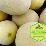 How Many Fruits Does A Cantaloupe Plant Produces? Explainer For Beginners!