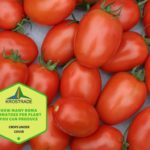 Example Of How Many Roma Tomatoes Per Plant You Can Produce? 4 Bonus Steps!