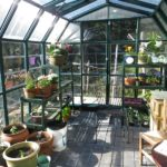 When to Start Growing Vegetables In A Polytunnel in London? The Explainer!