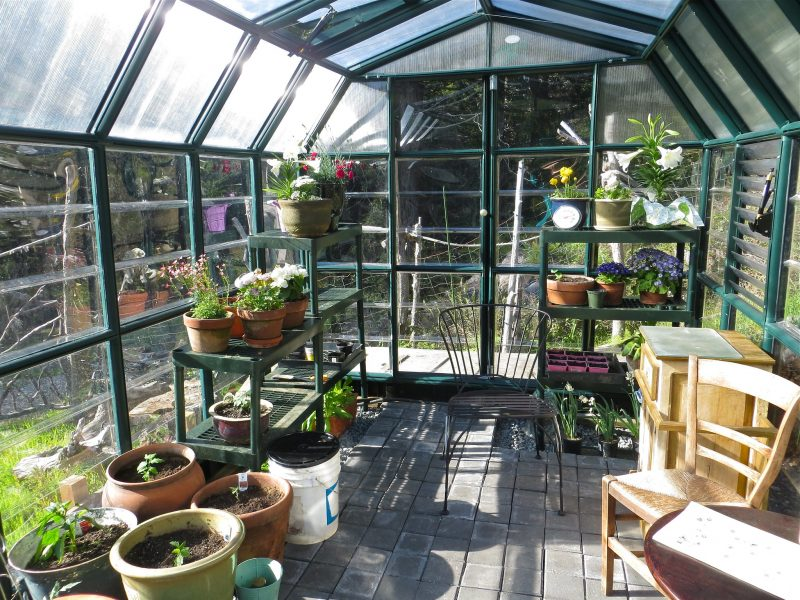 How Soon Can You Start Growing In A Greenhouse Upstate NY