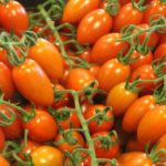How To Grow Tomatoes In A Mini Polytunnel? 4 Free Steps!