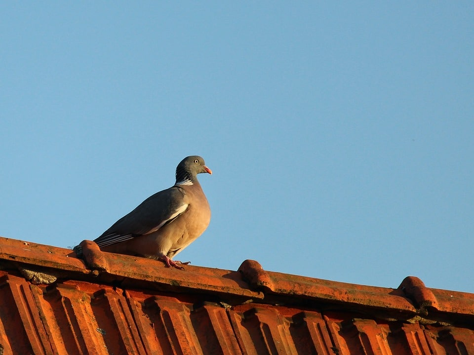 How To Keep Birds From Building Nests Under Carport