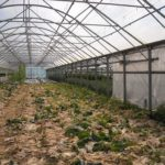 How To Keep Grass From Growing In Your Polytunnel? 3 New Methods!