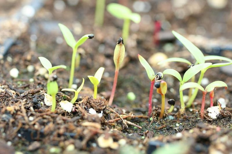 How To Prepare The Seeds Of Crops Before Planting In A Greenhouse