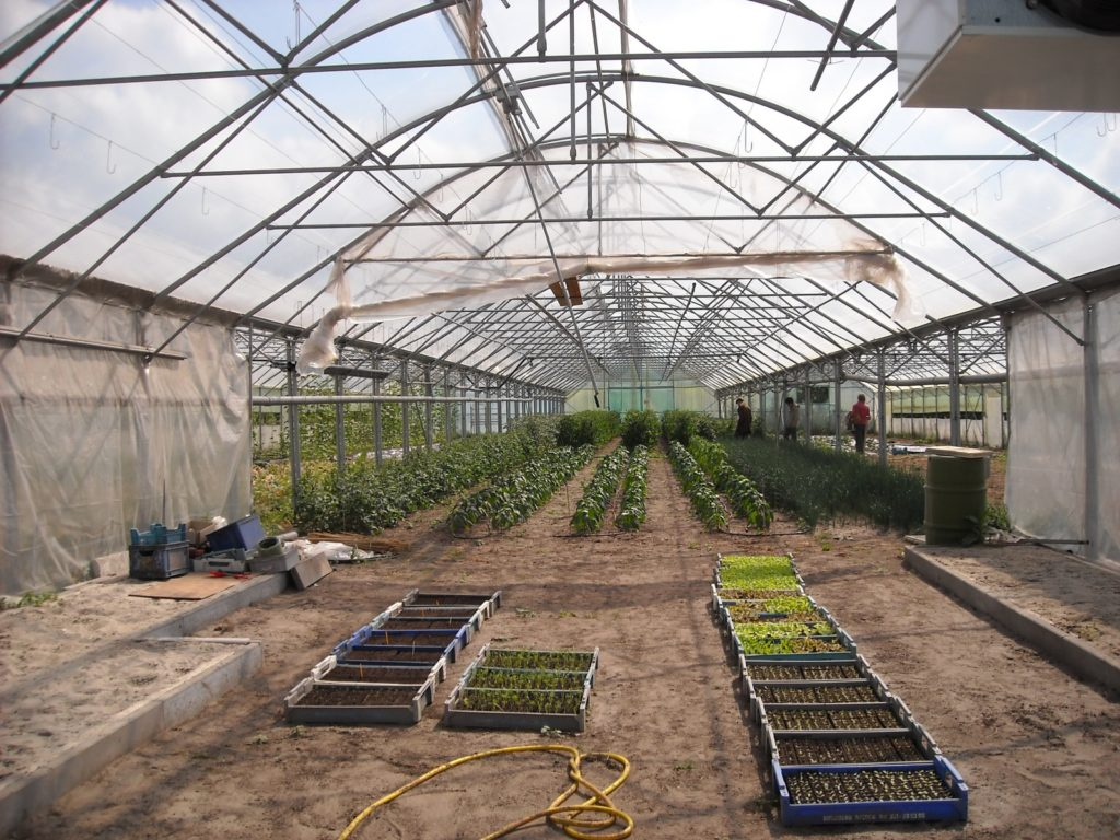 How To Start Growing Plants In A Greenhouse