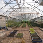 How To Start Growing Plants In A Polytunnel? 5 Exclusive Tips!