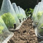 How Warm Should it Be Before You Can Put Plants Outside in a Mini Polytunnel? 7 Bonus Ideas!