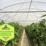 Example Of How To Increase Humidity in Polytunnel? Explainer For Beginners!