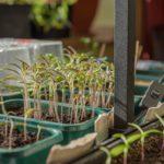 How to Keep Plants Warm Inside a Mini Polytunnel