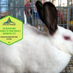 Is Raising Rabbits For Meat Worth It? Pros and Cons!