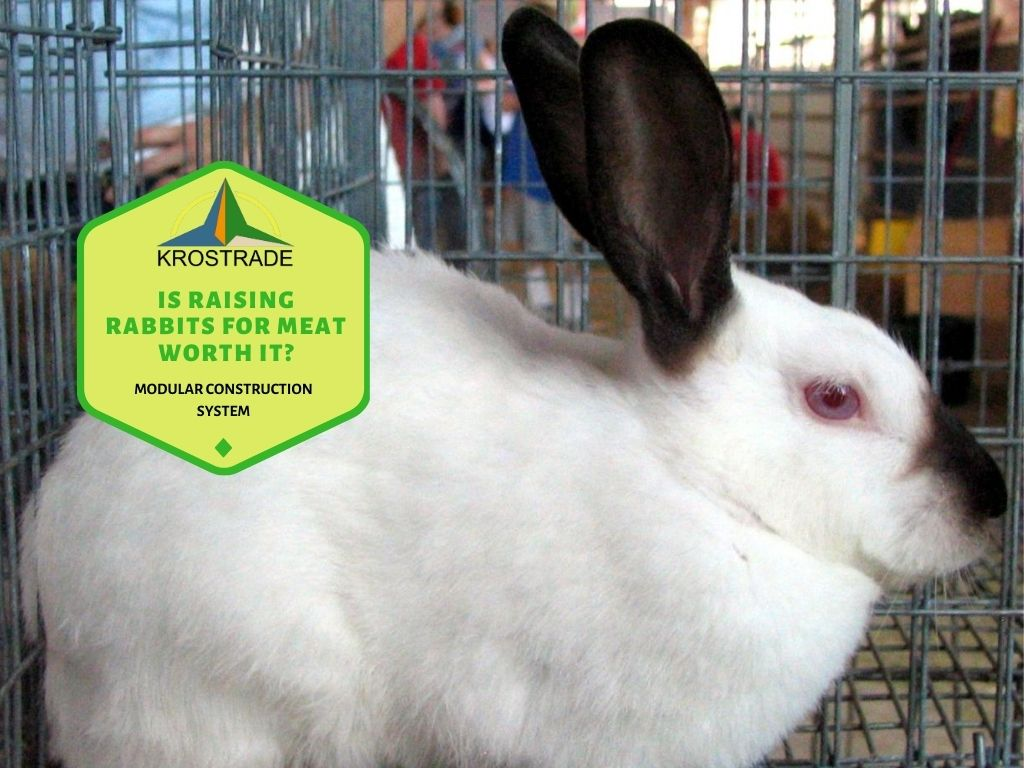 How Much Does It Cost To Raise A Rabbit For Meat?