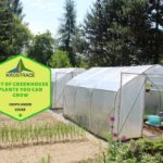 List Of Polytunnel Plants You Can Grow
