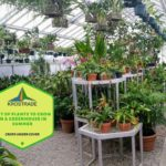 Polytunnel Plants List: Everything You Need To Know!