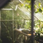 Example Of How To Recreate Wild Conditions When Growing Mint In A Polytunnel?