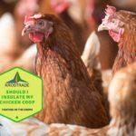 Should I Insulate My Chicken Coop? Beginners Explainer!