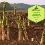 Example Of Stages of Growing Asparagus! 3 Bonus Steps!