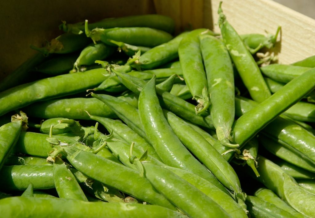 Sugar Snap Peas Companion Plants