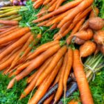 Example Of Growing Carrots in the UK! Video Download!