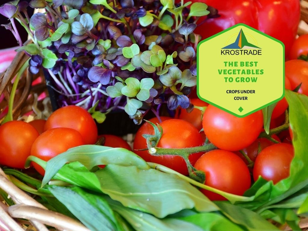 Types of Vegetables that Grow Best