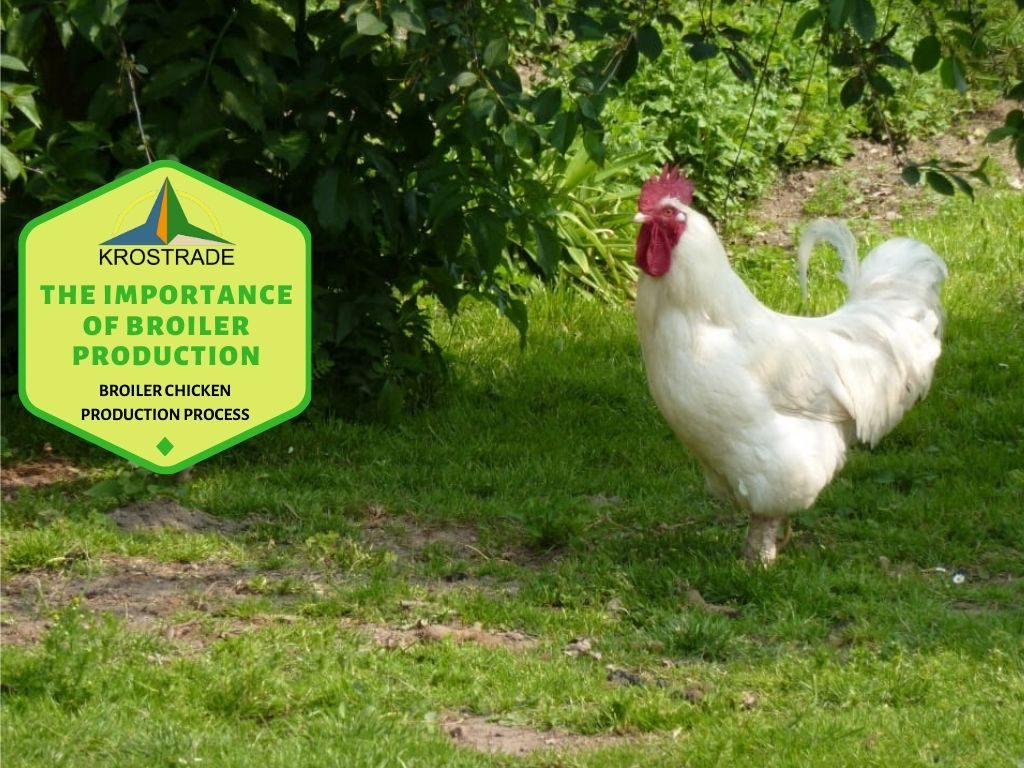 Broiler chicken production process